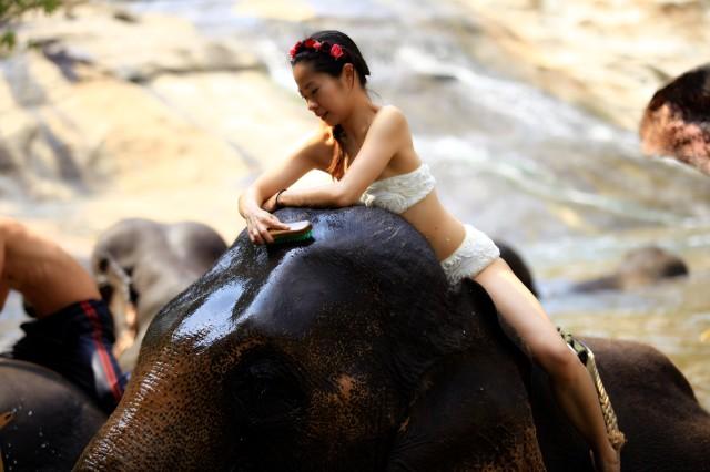 elephantbath3